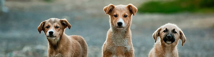 大阪市にある動物病院併設のトリミングサロン特集【6選】