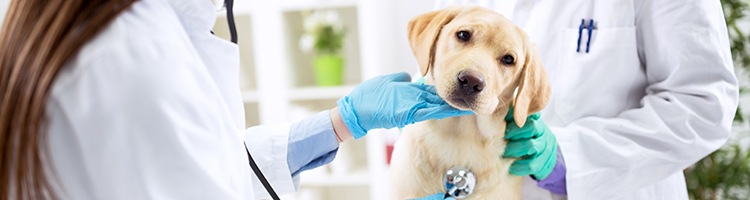 緑区・北区(さいたま市)でクレジットカードが利用できる評判の動物病院4選