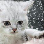 札幌市の動物病院【2選】2020年更新口コミあり