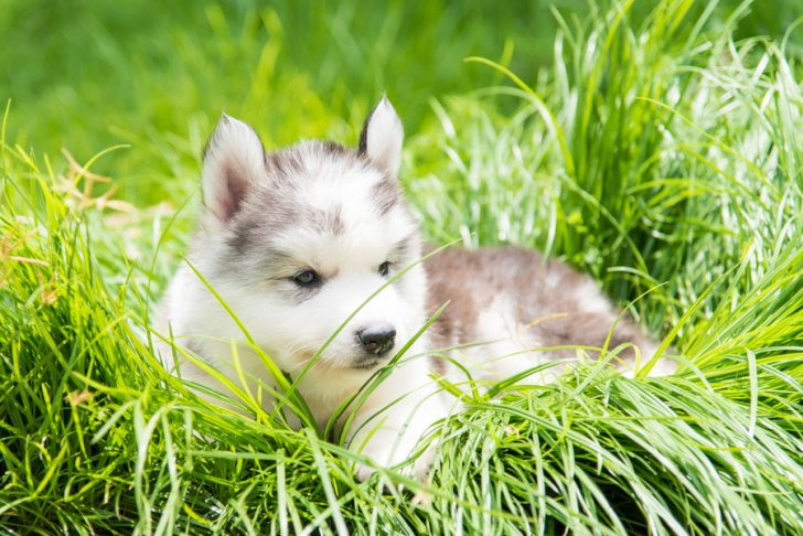 【獣医師監修】犬のできものについて