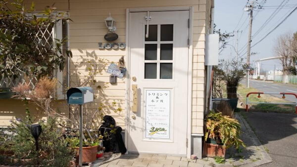Loco Dog Salon