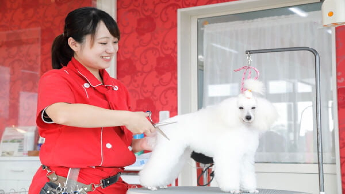 Eathetic health&beauty for Dogs MissLacy つくば