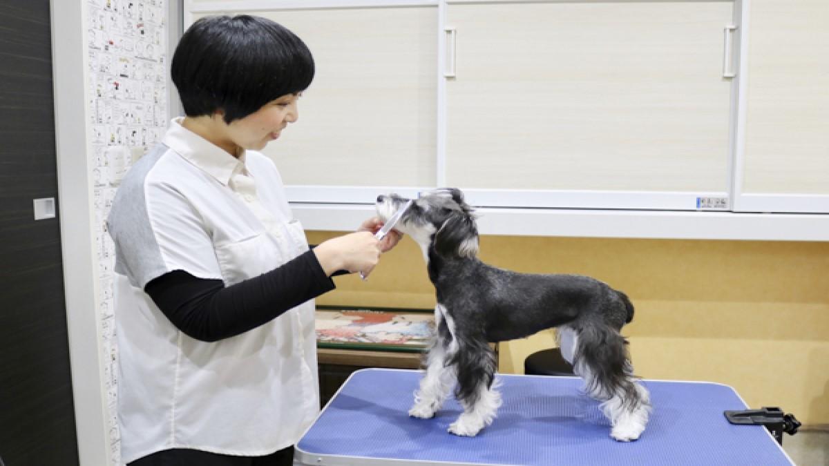 Dog Salon Ritz