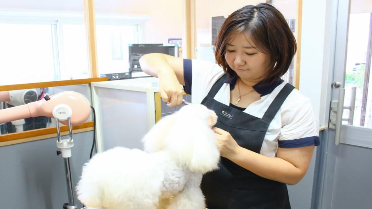 Dog care Salon IPPUDA