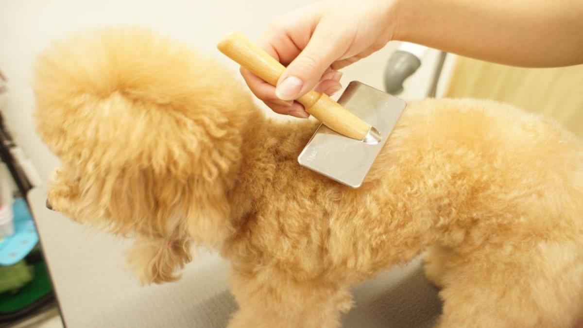 Pet's Salon パレハ 天神店