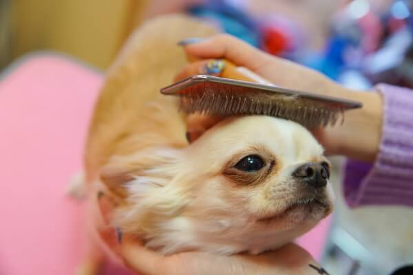 Dog salon 美ら【2月14日移転リニューアルオープン!!】
