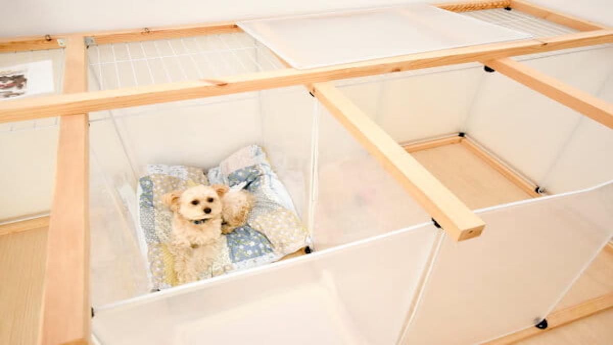 犬サロン おれんじ【トリミング限定】