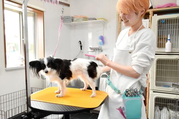 Dog Salon Harry