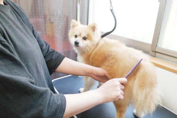 DOG TRIMMING POPOLON