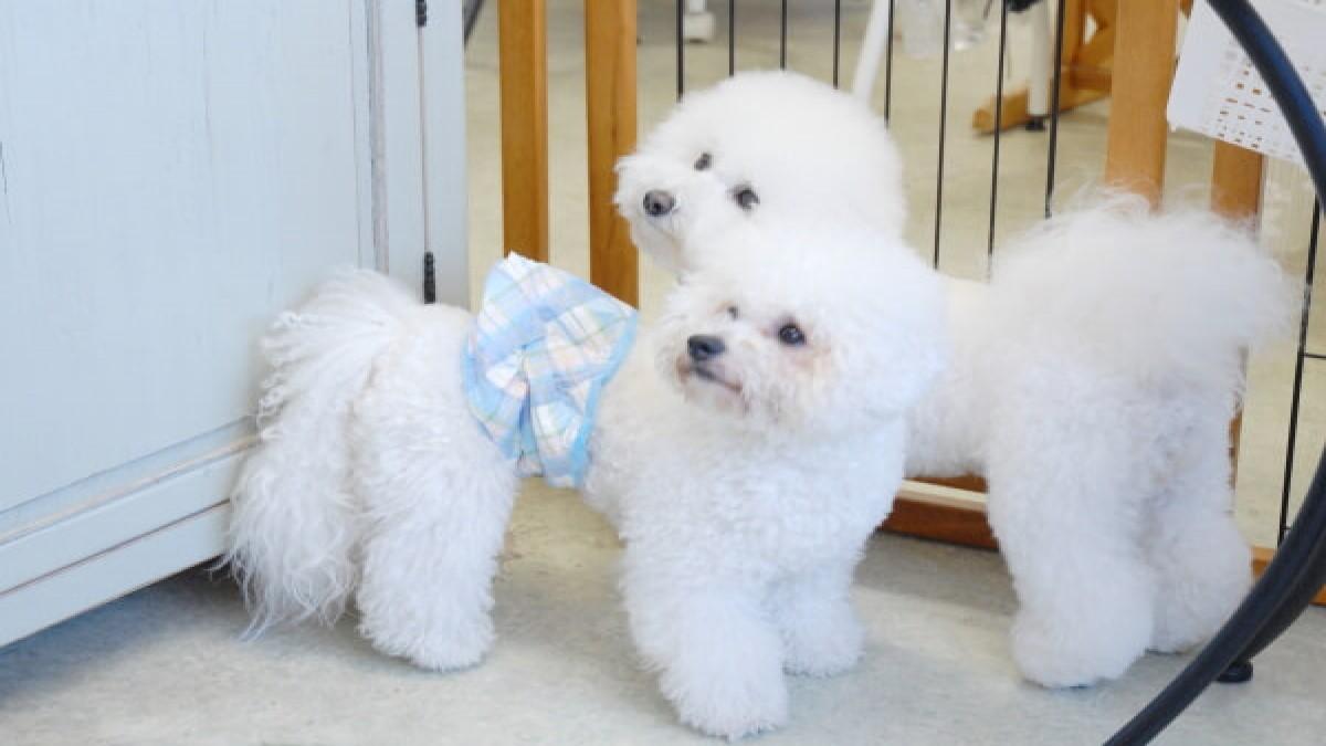保育園型dog salonくろーばー
