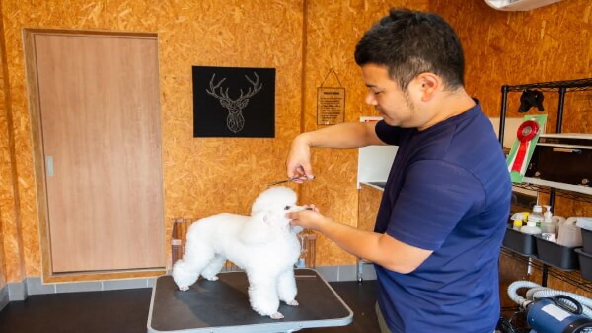 Dog salon sou 蒼