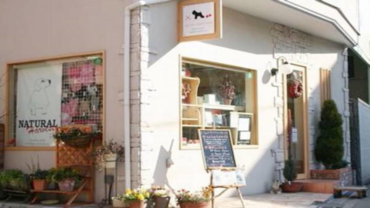 dogsalon cherry house