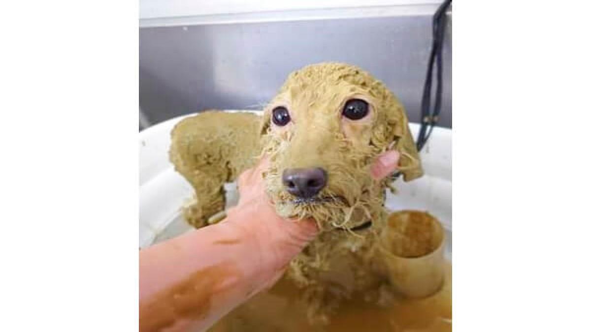 LeaLea Dog