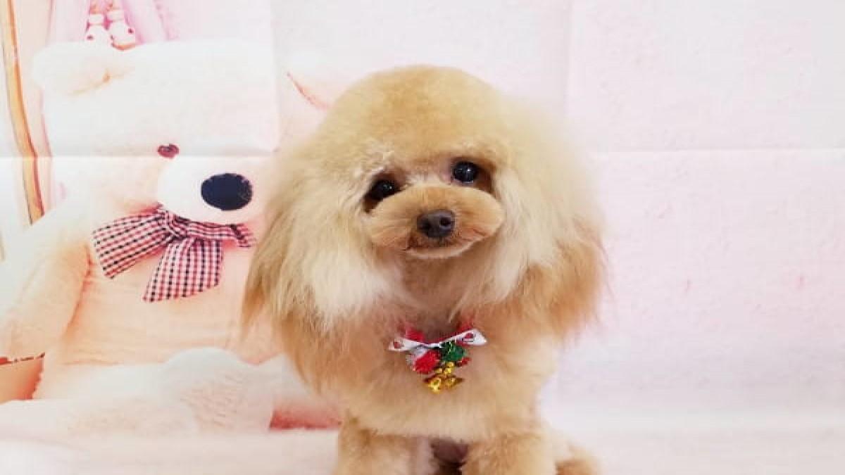 Dog salon Mon chouchou