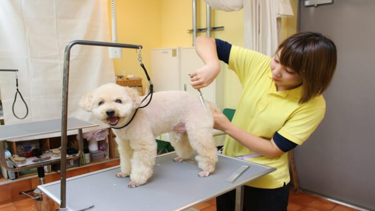 愛犬のためのトータルケアサロン エヴァ