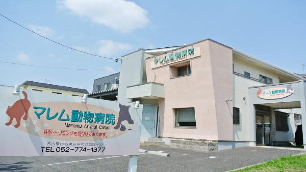 マレム動物病院(トリミング)