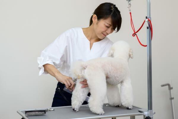 Dog salon Fam