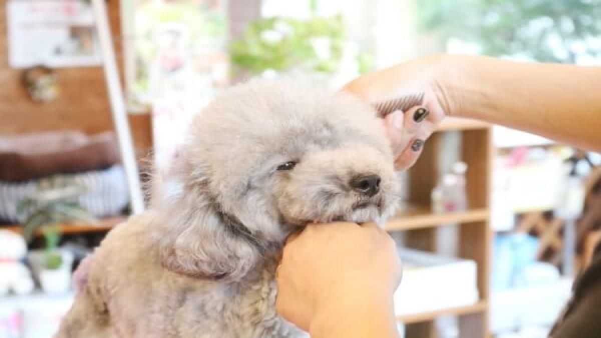 Marie's Dog Cafe