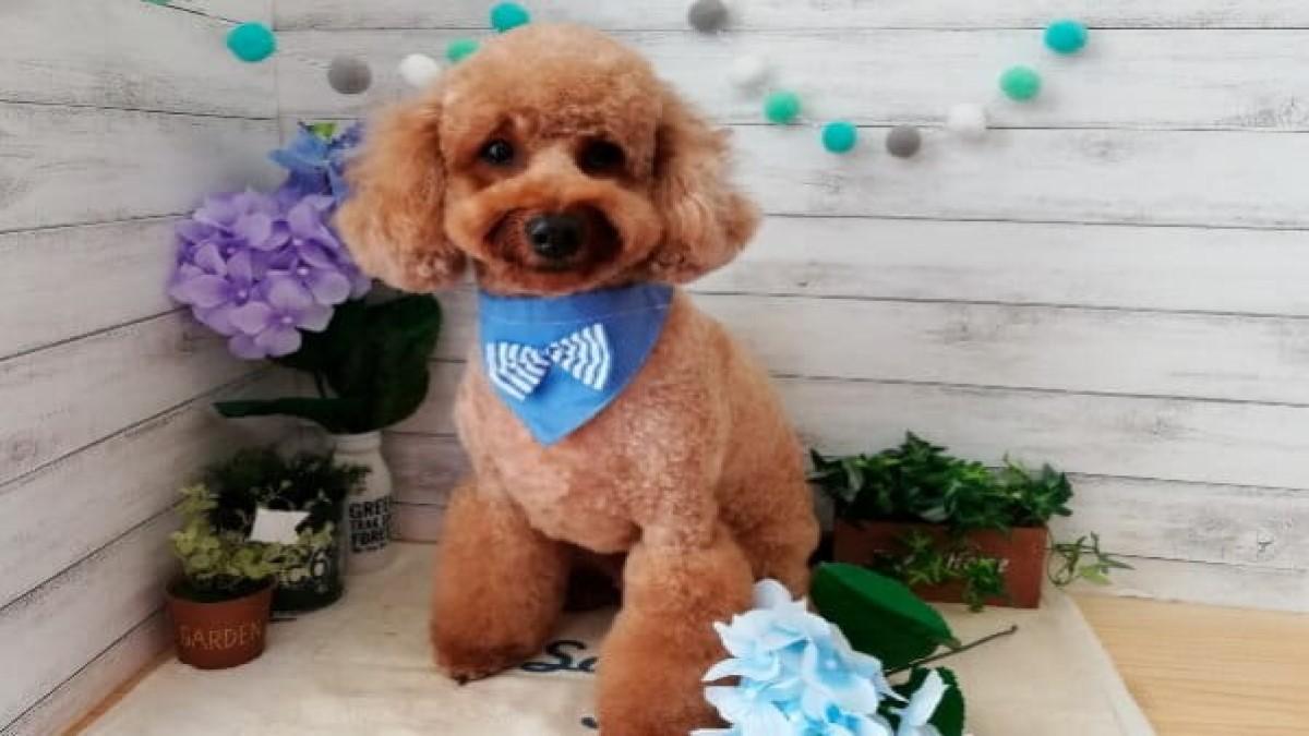 Dog Salon ONE WAN