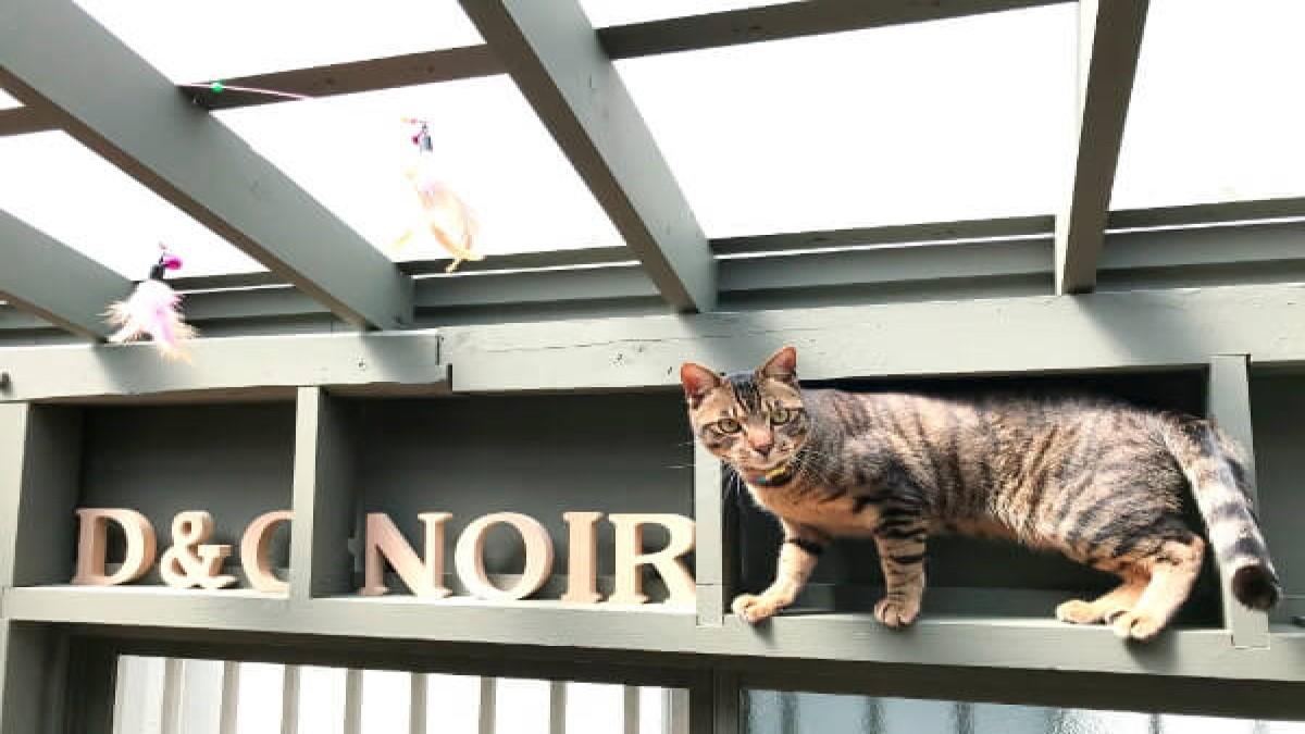 Dog & Cafe Noir