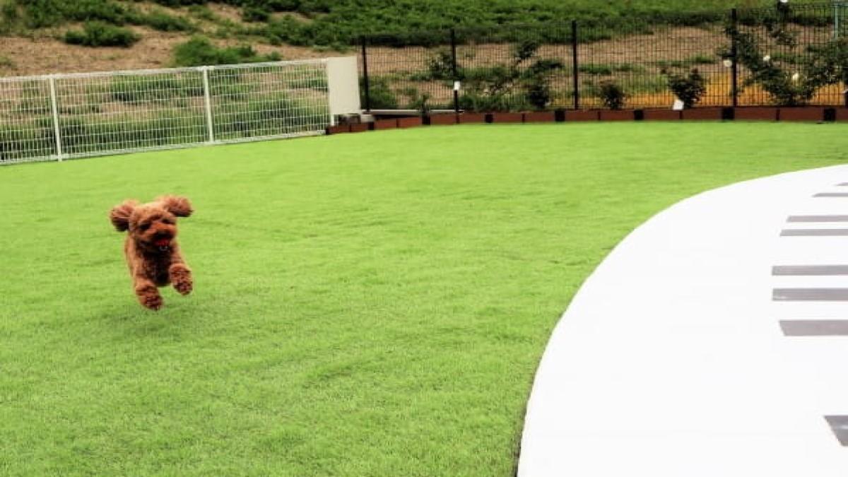 ガーデン&ドッグ