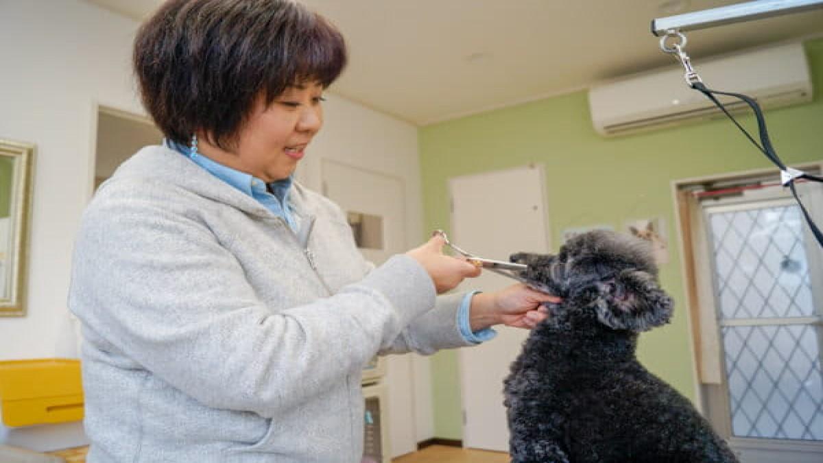 Dog Salon R&D+