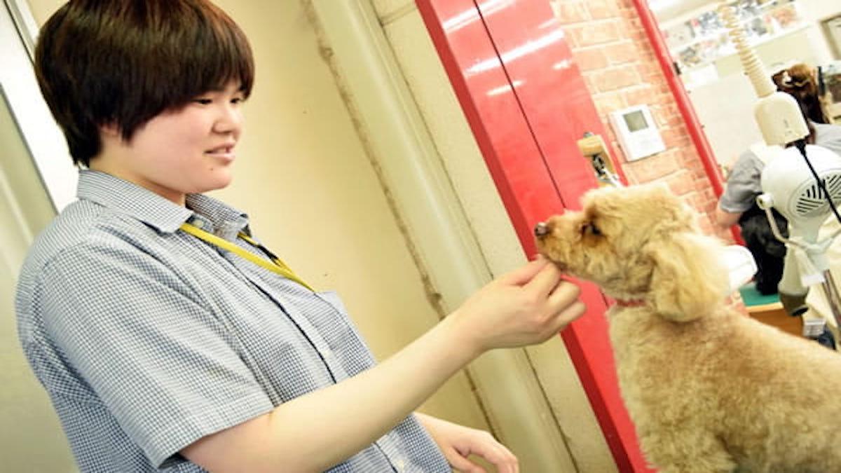 Ishihara Dog Salon OHANA