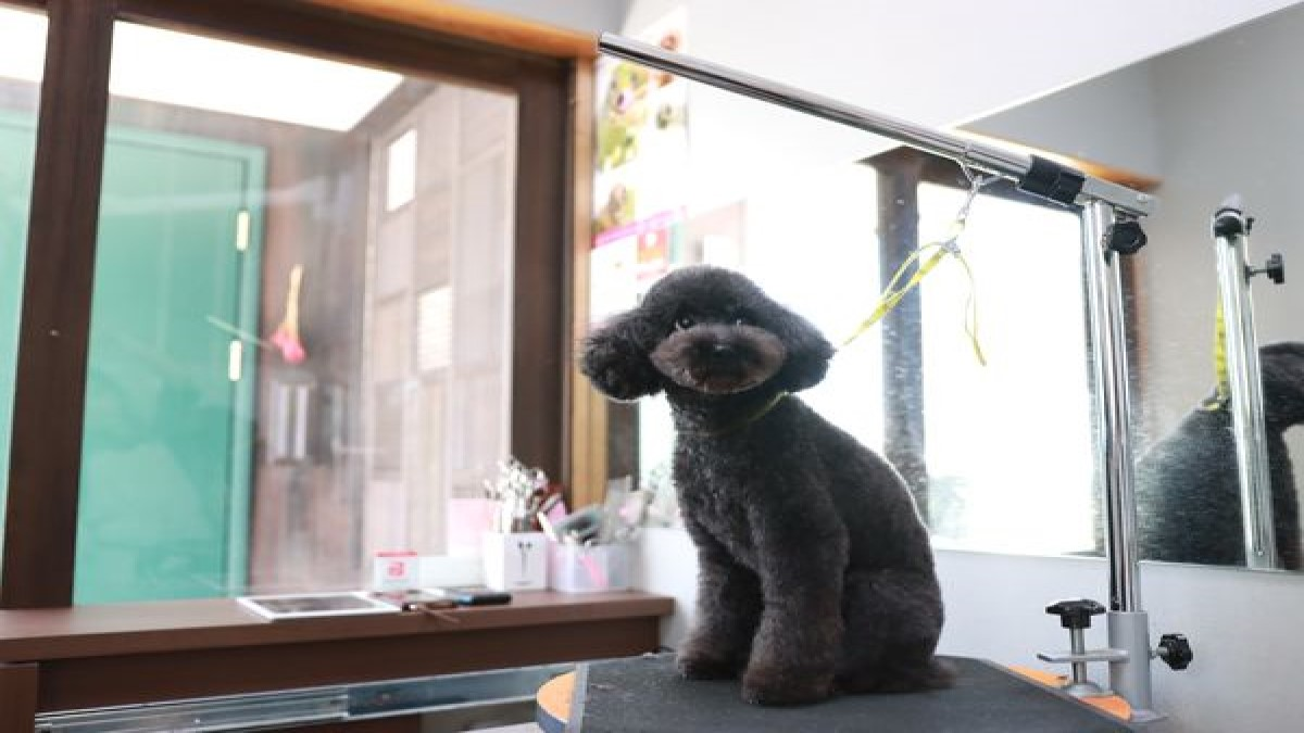 dog salon coconico