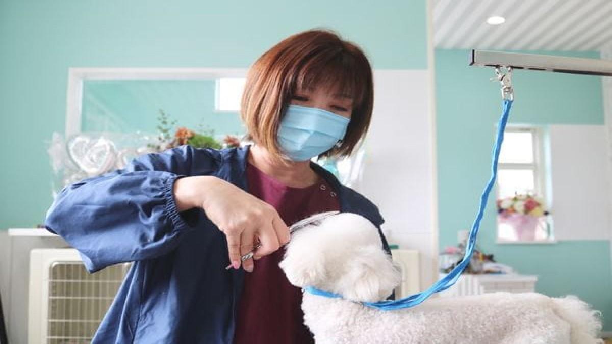 Dog Salon Ks