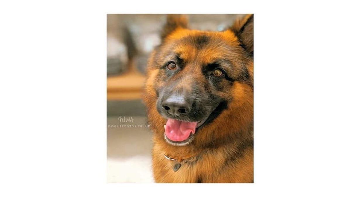 DOG LIFE STYLE BLUE