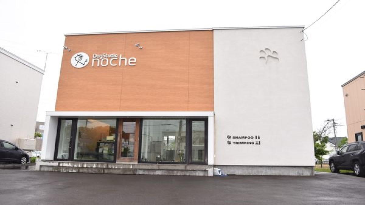 Dog Studio NOCHE