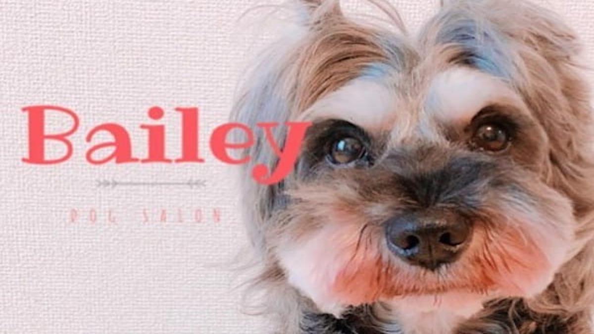 dog salon Bailey