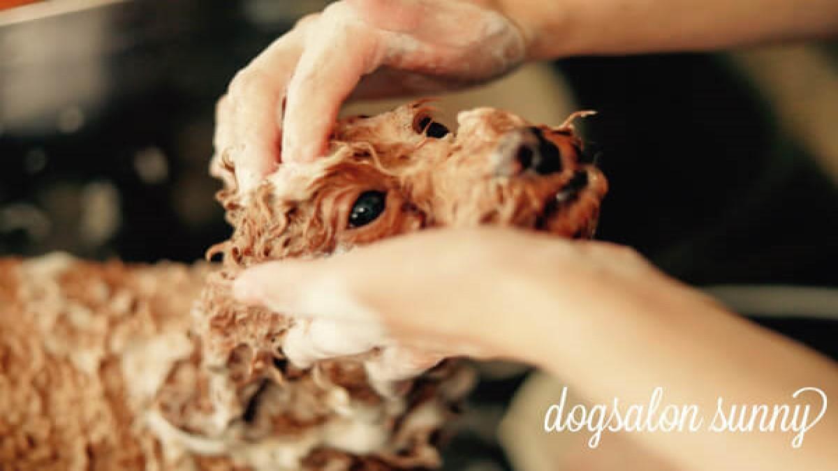 Dog Salon Sunny
