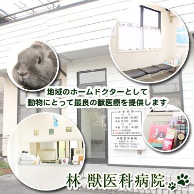 林獣医科病院