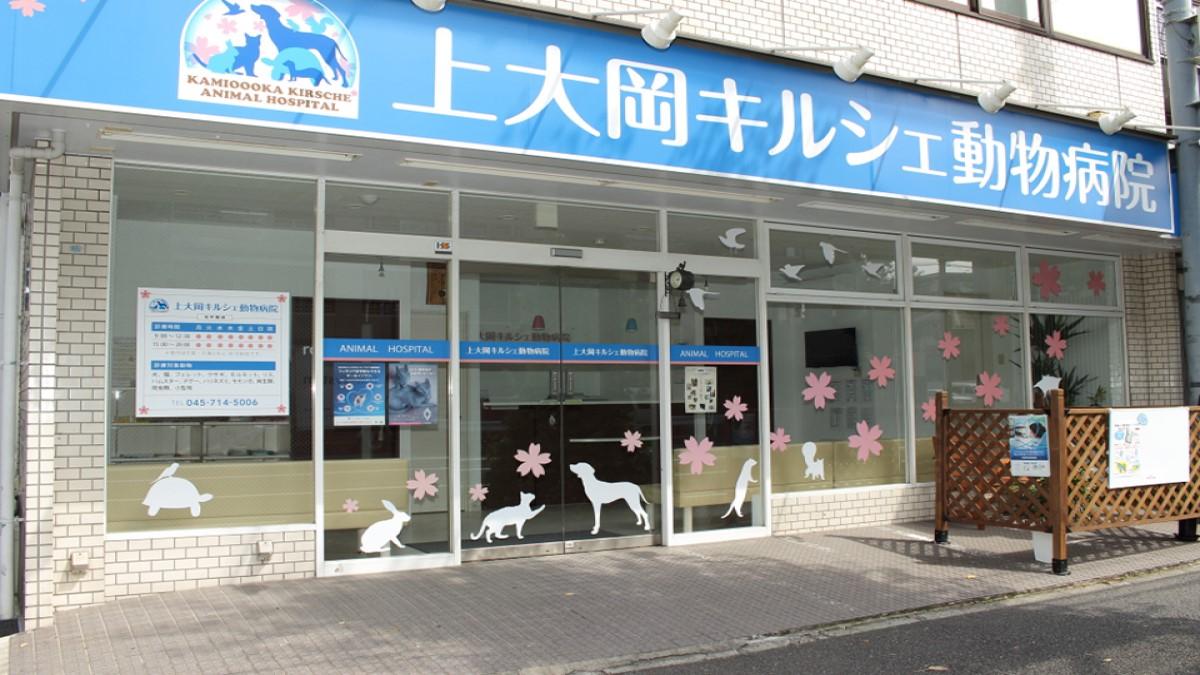 上大岡キルシェ動物病院