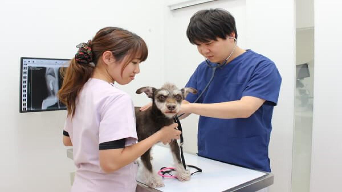 もりの動物病院