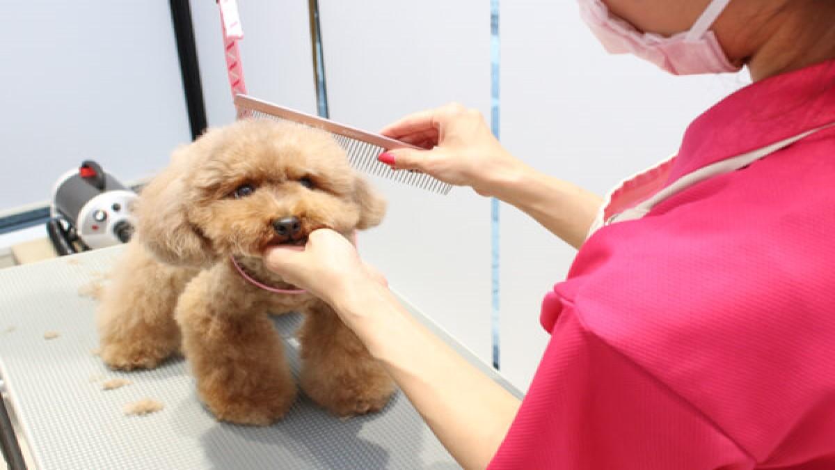 シリウス犬猫病院