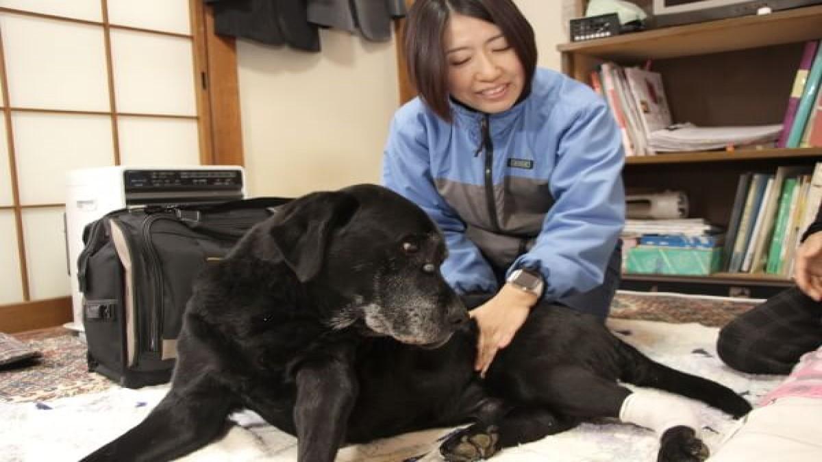 動物往診+在宅ケアサービス にくきゅう