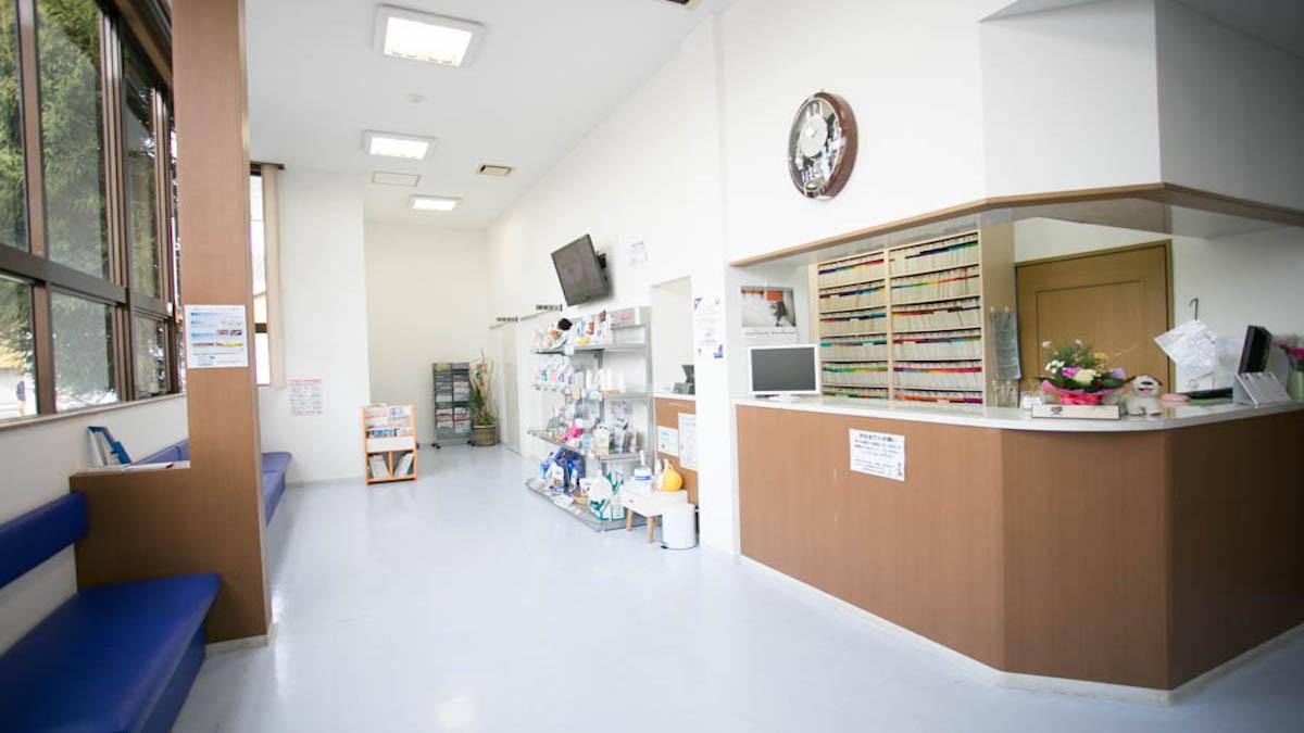 ブン動物病院