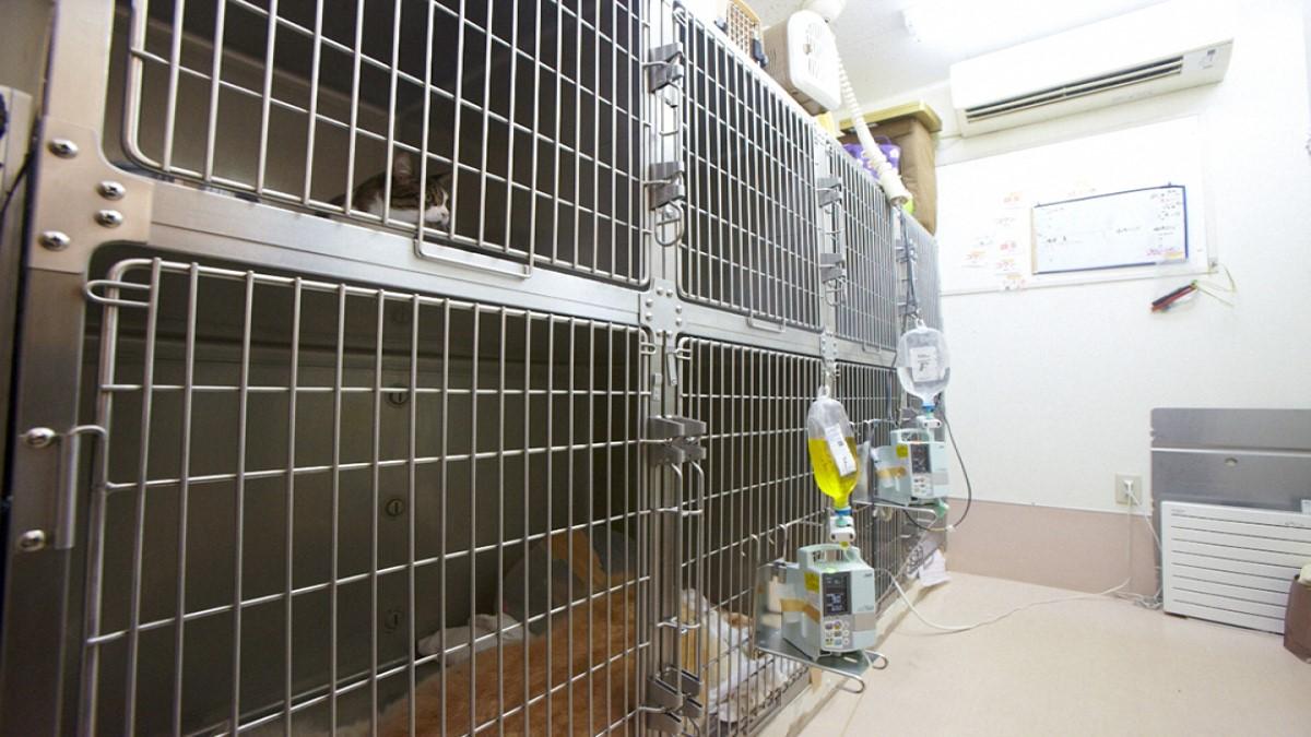 ヴィータ動物病院