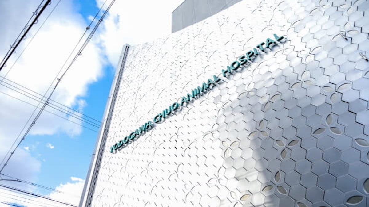 淀川中央動物病院