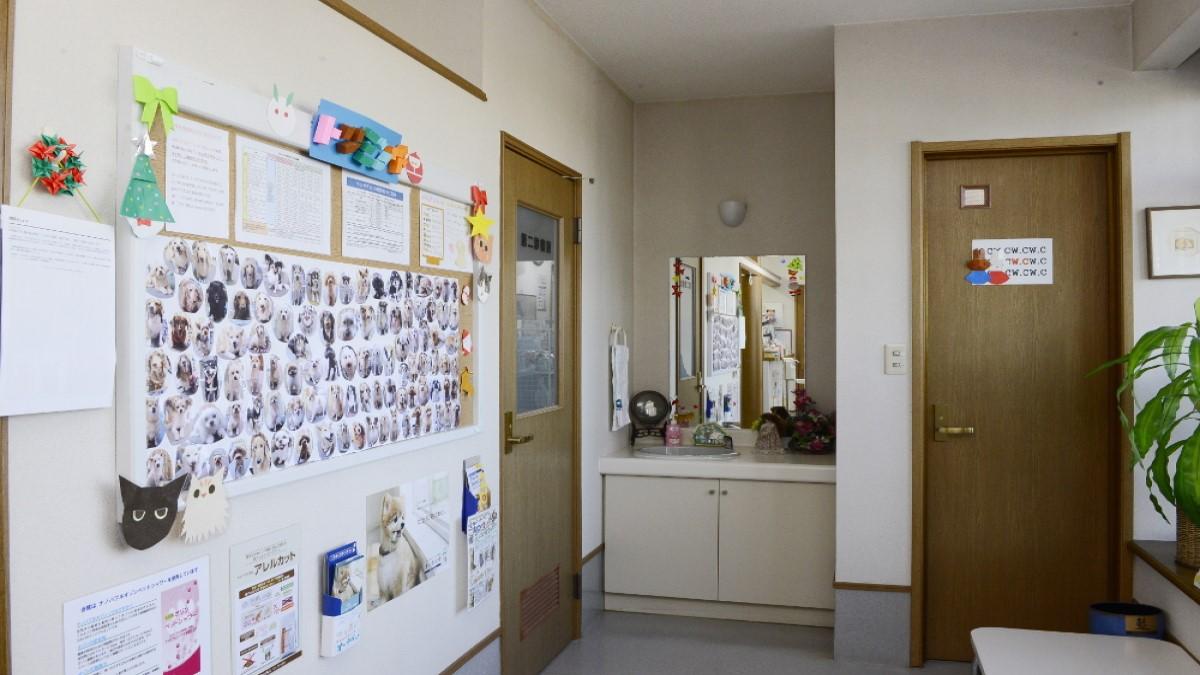 平和動物病院(トリミング)