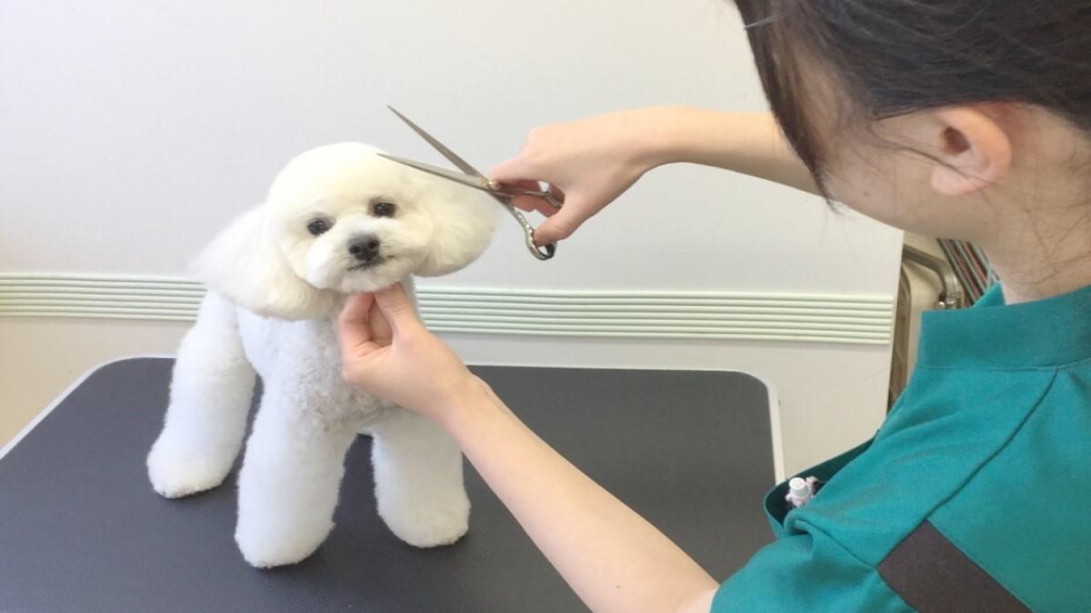 ぬのかわ犬猫病院 戸塚本院(トリミング)