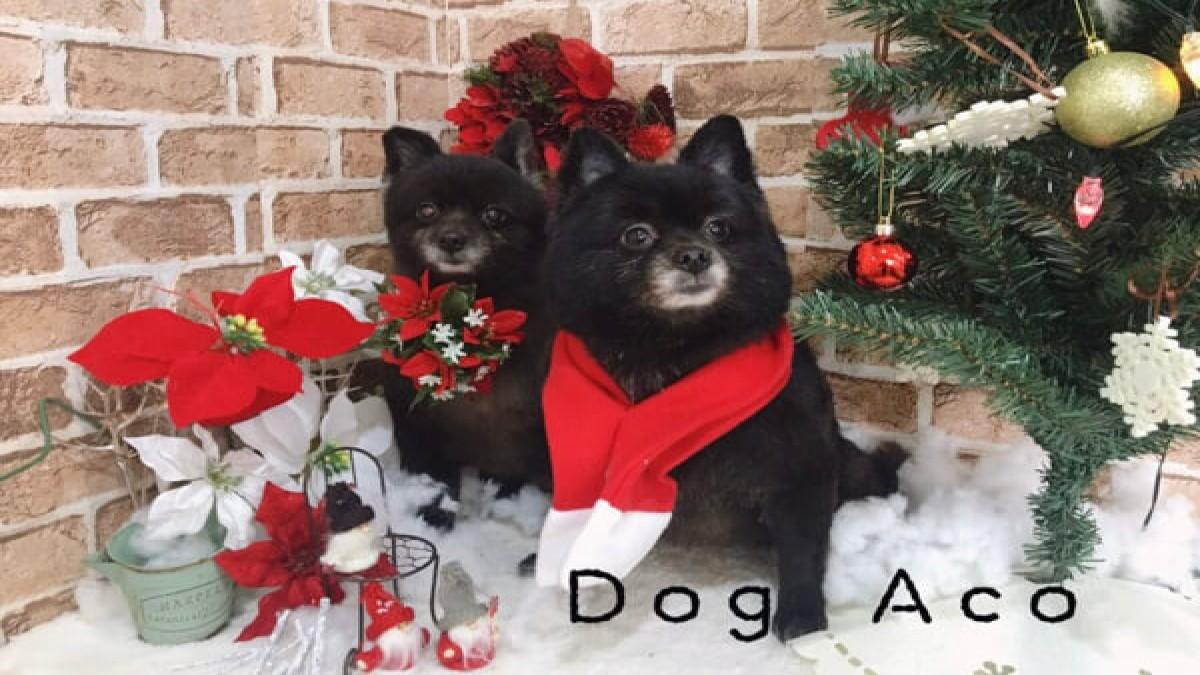 Dog Aco