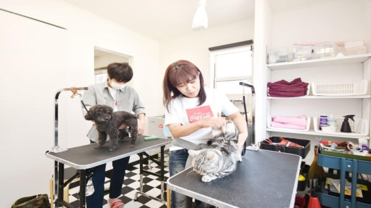 Dog&Cat 12wannyan