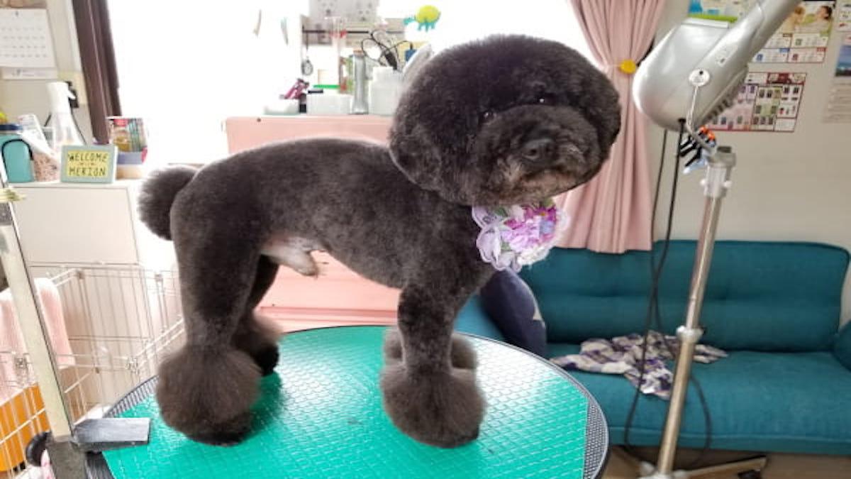 Dog care salon メリオン