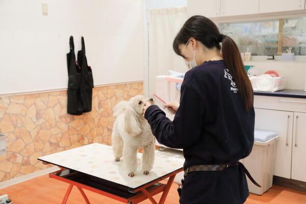 Pet's Salon Minerva綾川店
