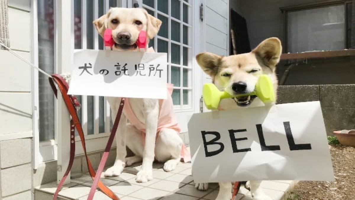 犬の託児所 BELL