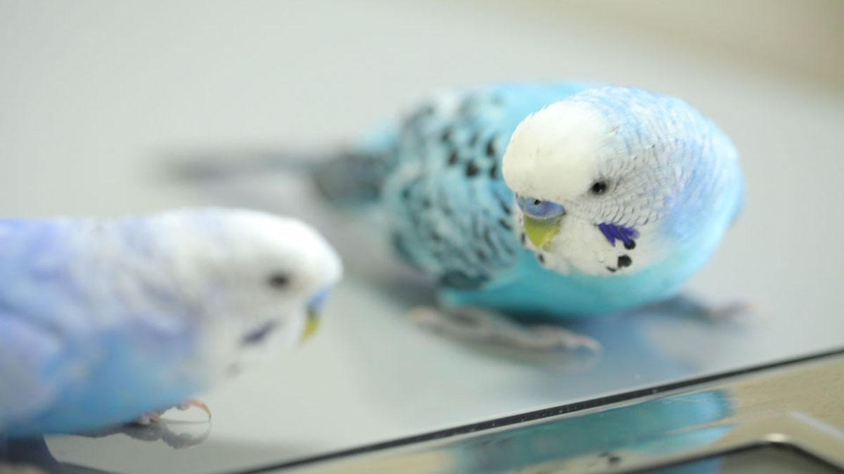 小鳥と小動物の病院