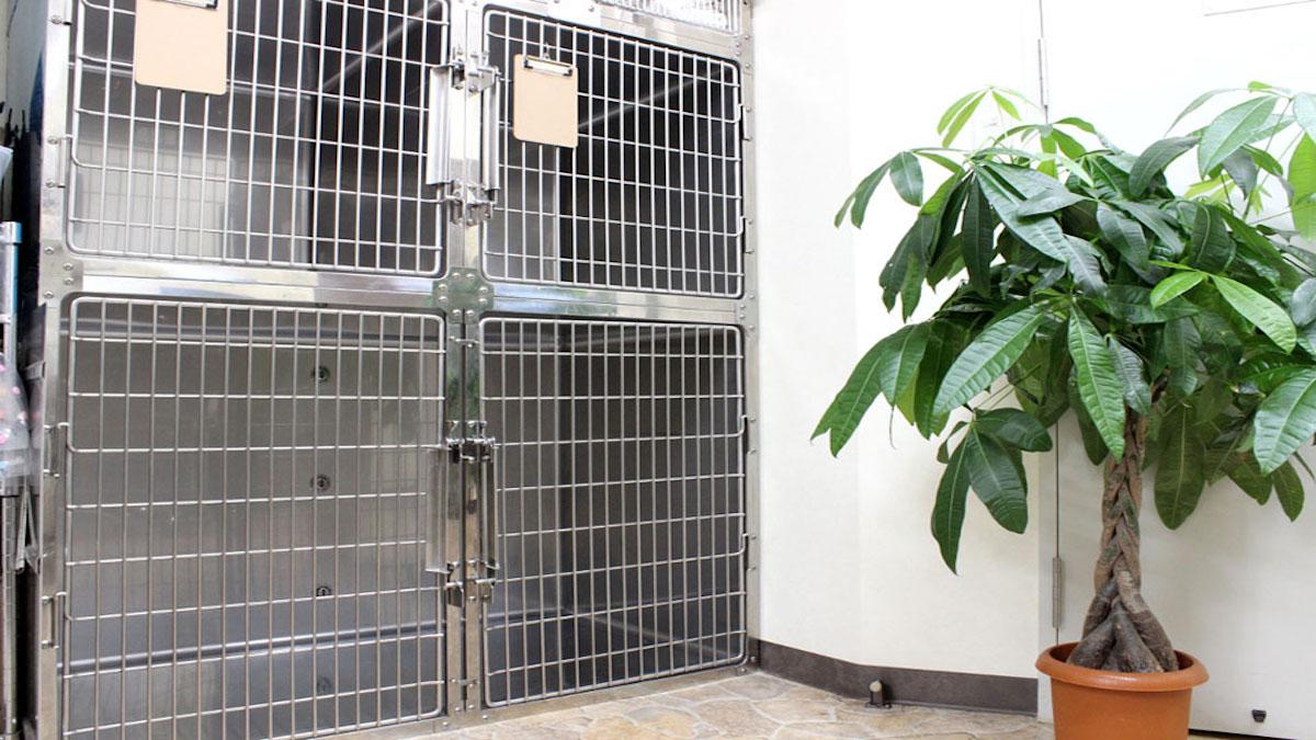 ノア動物病院 Hako bu neco 猫専門病院